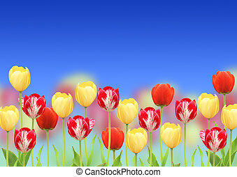 Flowers of a tulips