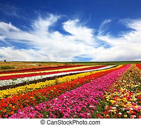 The beautiful multi-colored flower fields. - Garden...