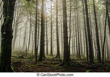 Mystic forest - Beautiful nature photography inside the...