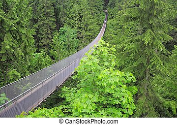 Capilano suspension bridge. North Vancouver. Canada.