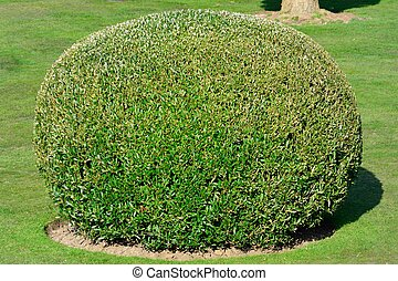 Spherical topiary