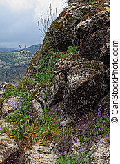Golan Heights - Wild Flowers growing out of a rock Golan...