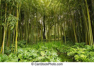 Bamboo At Gardens Of Ninfa - Gardens Of Ninfa, Bamboo