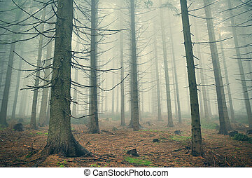 Scary mountain forest in dense fog