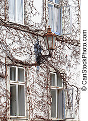 Old street lamp on a house wall covered with leafless ivy
