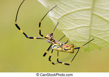 spider - a kind of insects named spider, body covered with...
