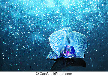 Orchid in water with lights