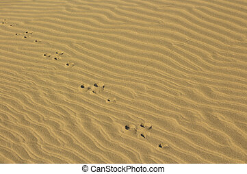 Tracks In Sand - Some foot marks of a rabbit going across...