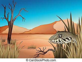A reptile in the dessert