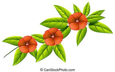 Three orange flowers - Illustration of the three orange...