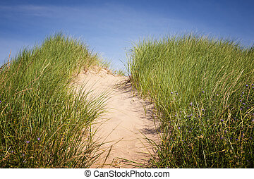 Path over sand dunes with grass