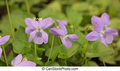 Little violet flower