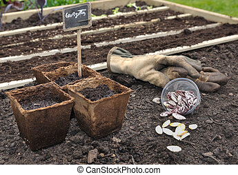 seedlings - seeds and seedlings in biodegradable pots for...