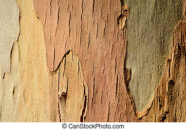 Eucalyptus tree background texture horizontal