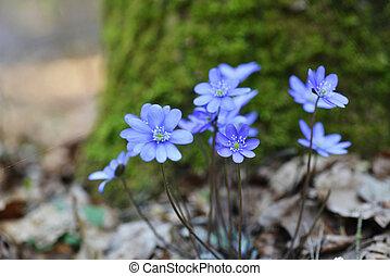 azul, flores