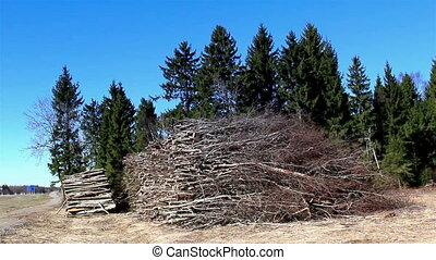 Heaps of firewoods from cut trees - Heaps of firewoods from...