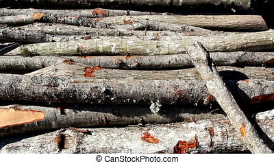 Set of firewoods lying on the ground with trees around the...