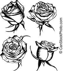 roses set - Vector illustration flower rose set