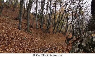 Wind Blowing Leaves of the Forest - Wilted leaves fall...