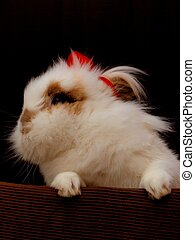 Lionhead bunny - A white lionhead bunny model, with a red...