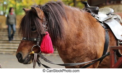 Small Horse Pony - Close up with a pony Compared to other...