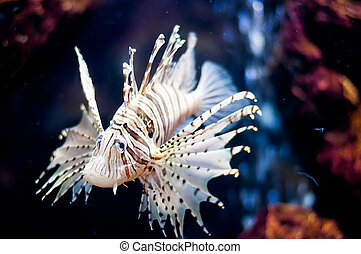 Fish lions - A Lion fish in the fish museum