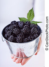 Blackberries in a small bucket - Fresh and ripe blackberries...