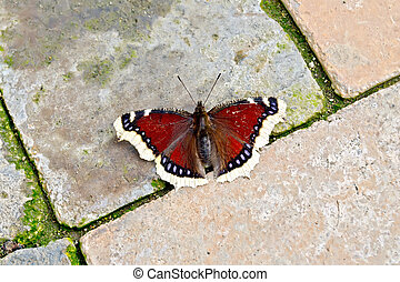 Butterfly brown on bricks - Brown butterfly on a background...