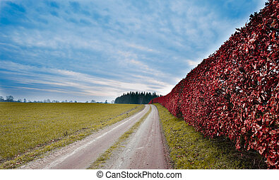Vibrant hedgerow in the German countryside