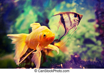 Colorful fishes in aquarium - Tropical colorful fishes...