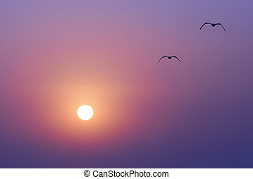 Sunset and seaguls - Beautiful sunset on the sea, red sun...