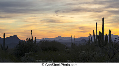 Arizona Desert Sunset - Sunset at Dove Mountain in Tucson,...