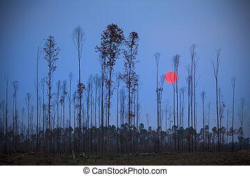 sol, Conjunto, atrás, eucalipto, seco, árbol,...
