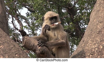 monkey on tree eating ice cream