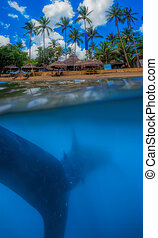Whale shark below - Tropical island and whale shark - above...
