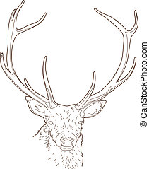 Drawing deer head - Vector illustration of an animal head,...