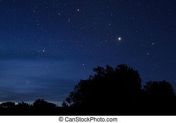 The Polaris star and night sky with trees skyline.
