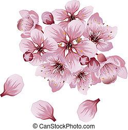 Soft Pink Sakura Flowers - Pink cherry blossom, sakura...