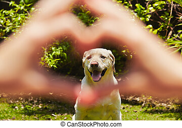 Loyalty dog - Young woman is making heart shape with her...