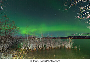 Aurora borealis display Lake Laberge shore willows -...