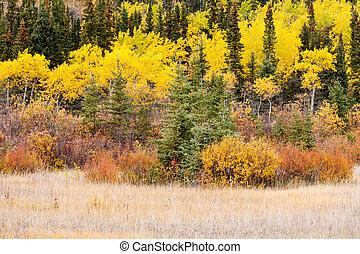 Canadá, colorido,  Taiga, bosque, otoño,  boreal,  Yukon