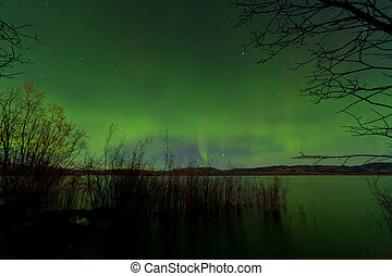 Northern Lights display Lake Laberge shore willows - Glowing...