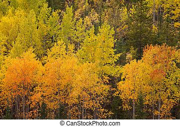 Yukon, boreal, bosque, Taiga, amarillo, otoño,...