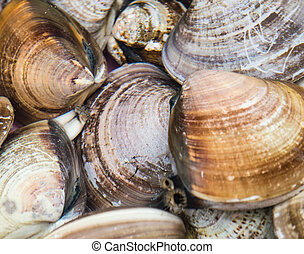 shellfish - mussels and water