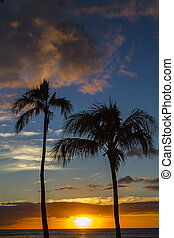 Tropic sunset - Sun setting between two palm trees