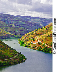 Douro - Vineyards in the Valley of the River Douro, Portugal
