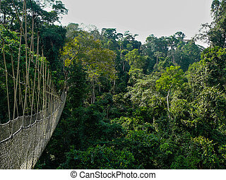 Canopy Walk - A long elevated walkway high up in the canopy...