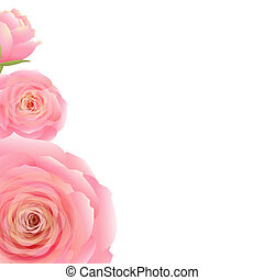 Pink Rose, With Gradient Mesh, Vector Illustration