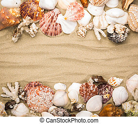 Sea shells on beach sand Summer background
