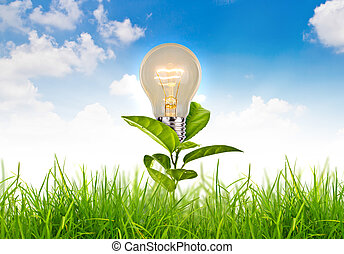 Eco concept - light bulb grow in the grass against white...
